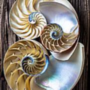 Three Chambered Nautilus Art Print by Garry Gay