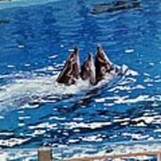 Three Dolphins Art Print