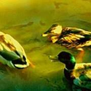 Three Ducks On Golden Pond Art Print