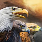 Three Eagles Art Print
