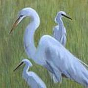 Three Egrets  Art Print