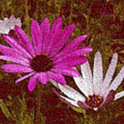 Three Flowers On Maroon Art Print