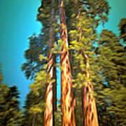 Three Giant Sequoias Digital Art Print