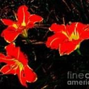 Three Lilies Art Print