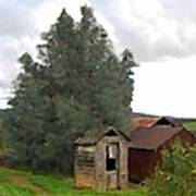 Three Old Sheds Art Print by Charlette Miller