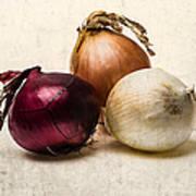 Three Onions - 1 Art Print