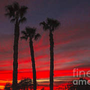 Three Palm Sunset Art Print