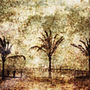 Three Palms 6-2 Art Print