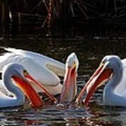Three Pelicans And A Fish Art Print