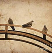Three Pigeons Perched On A Metallic Arch. Art Print