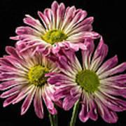 Three Pink Flowers Art Print