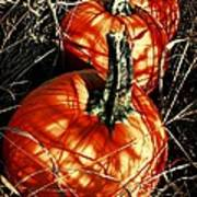 Three Pumpkins Art Print