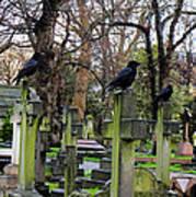 Three Ravens Art Print