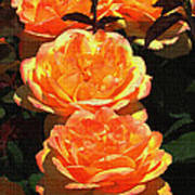 Four Rose At Mcc Art Print