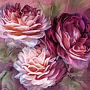 Three Roses Burgundy Greeting Card Art Print