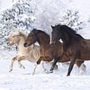 Three Snow Horses Art Print