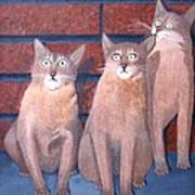 Three Tan Cats Art Print