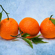 Three Tangerines Art Print by Alexander Senin