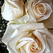 Three White Roses Art Print