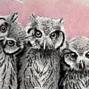 Three Wise Owls Art Print
