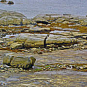 Thrombolites Up Close In Flower's Cove-nl Art Print