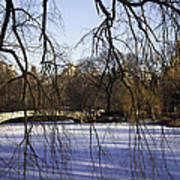 Through The Branches 1 - Central Park - Nyc Art Print