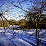 Through The Branches 4 - Central Park - Nyc Art Print