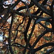 Through The Trees 2 Art Print