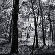 Through The Trees In Black And White Art Print
