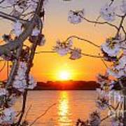 Tidal Basin Sunset With Cherry Blossoms Art Print