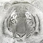Tiger #1 Art Print