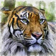 Tiger 26 Art Print