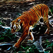 Tiger 4217 - F Art Print