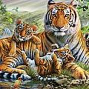 Tiger And Cubs Art Print by Adrian Chesterman