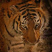 Tiger Art Art Print