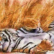 Tiger - Big Cat Art Print