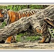 Tiger By The Log Art Print