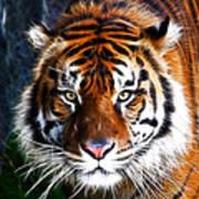 Tiger Close Up Art Print