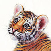 Tiger Cub Watercolor Painting Art Print