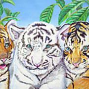 Tiger Cubs Art Print