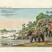 Tiger Hunting On An Indian River Art Print