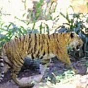 Tiger In Crayon Art Print by Judy  Waller