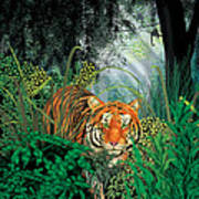 Tiger In The Jungle Art Print