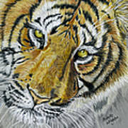 Tiger Painting Art Print