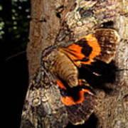 Tiger Moth Flight Art Print