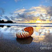 Tiger Nautilus Sunrise Art Print