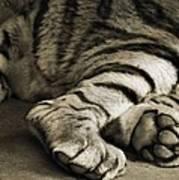 Tiger Paws Art Print