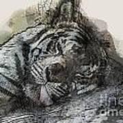 Tiger R And R Art Print