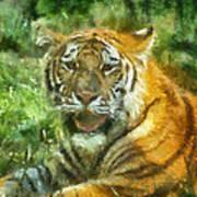Tiger Resting Photo Art 05 Art Print