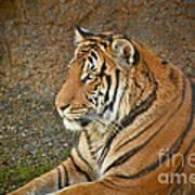Tiger Stair Art Print